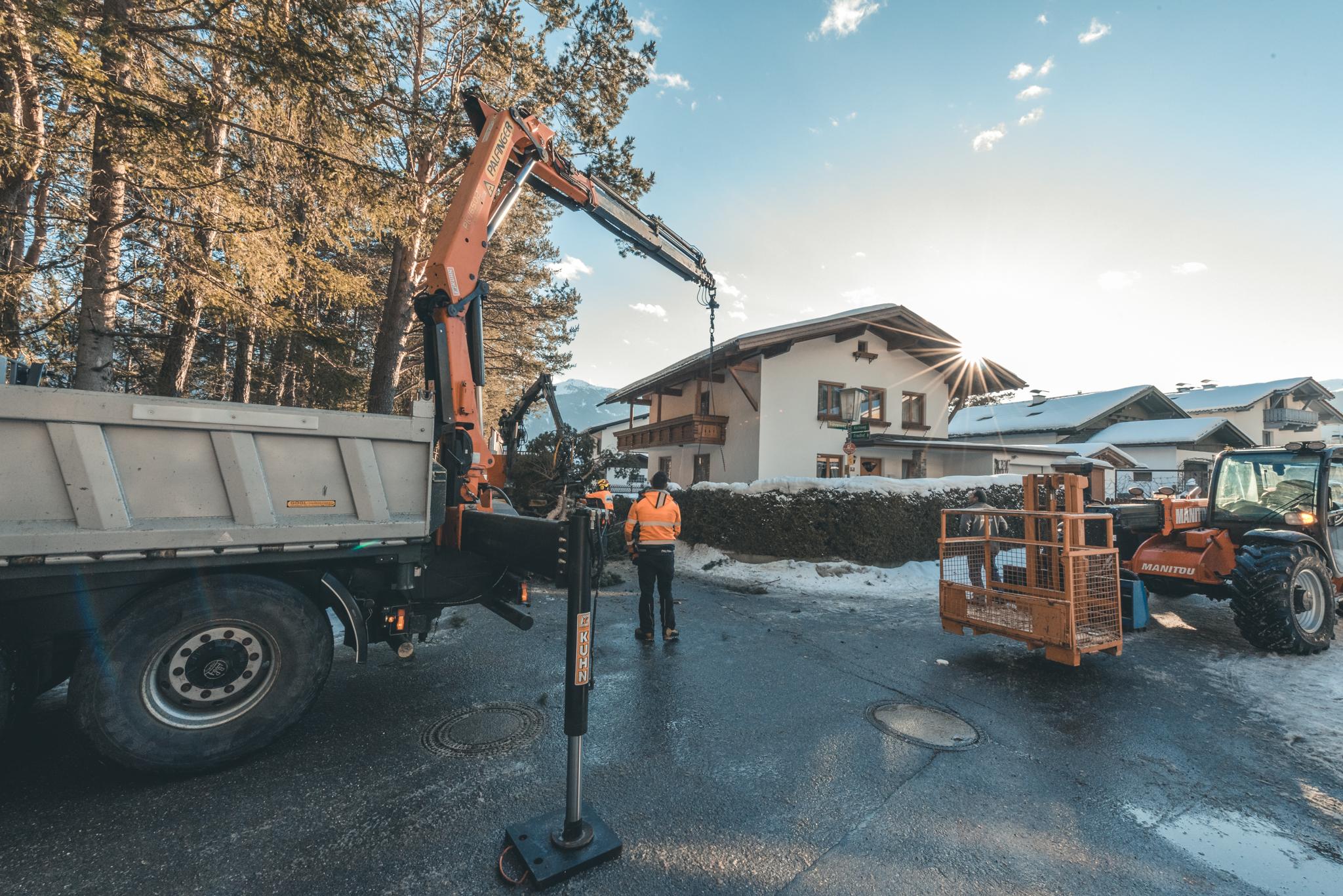 Problemholzfällung Siedlung Barwies